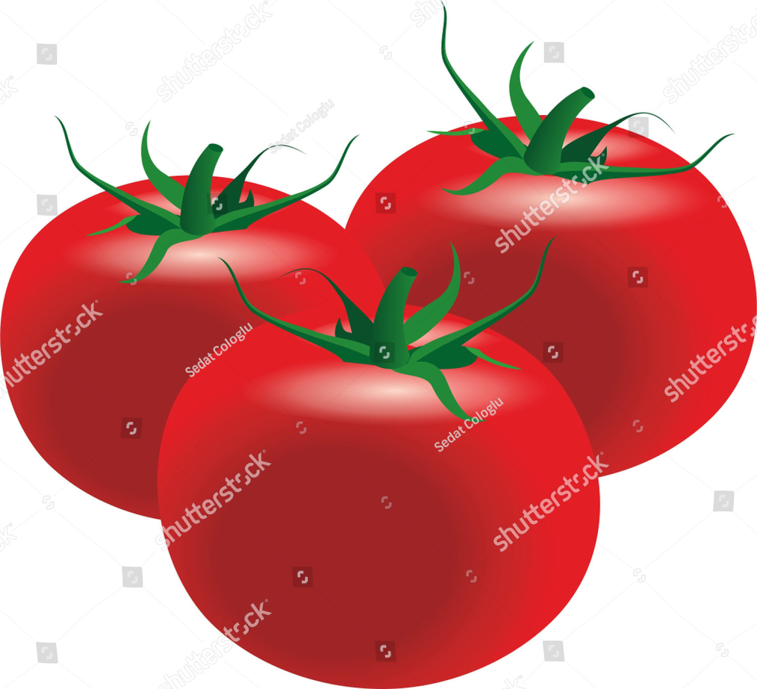 stock-photo-fresh-tomato-side-view-white-background-color-illustration-1441130864